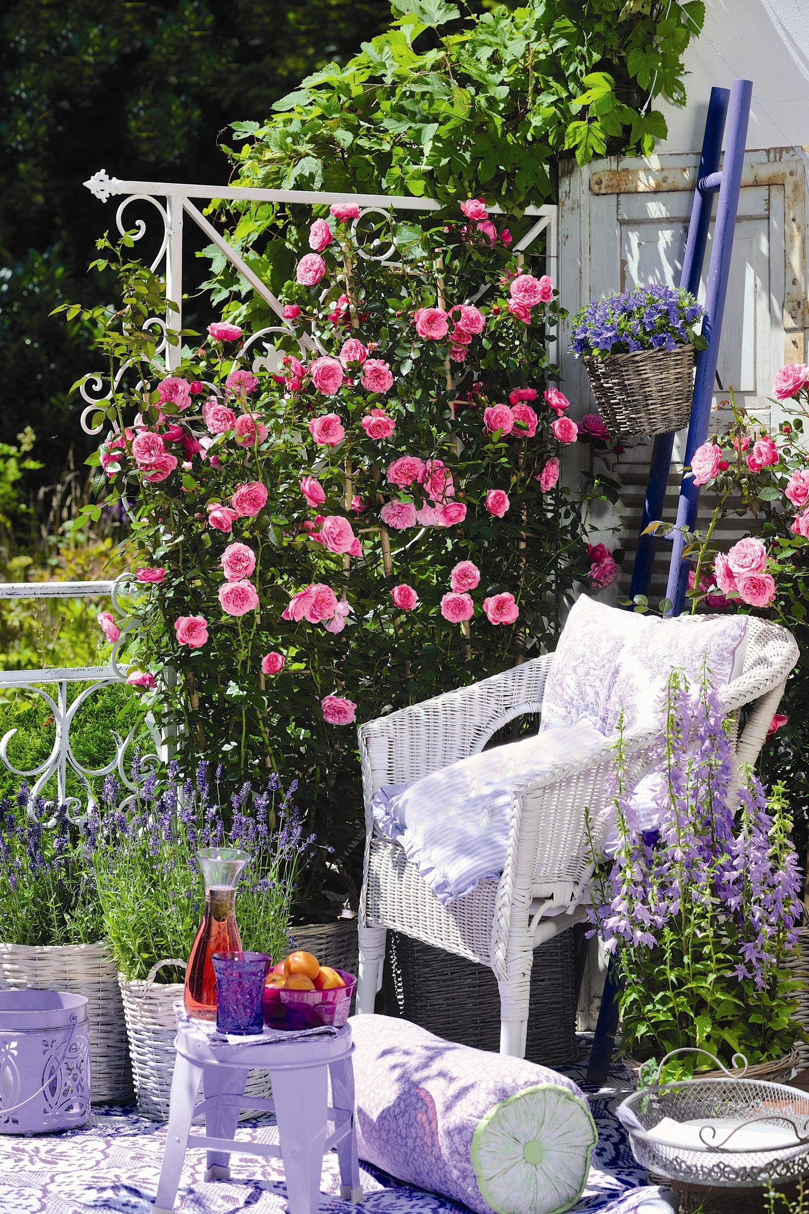 starlet rosen produkte rosen tantau. Black Bedroom Furniture Sets. Home Design Ideas