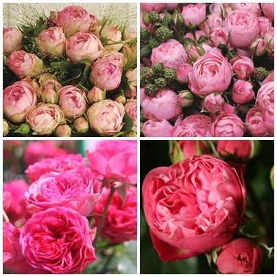 Romantic Rokoko® Roses Assortment