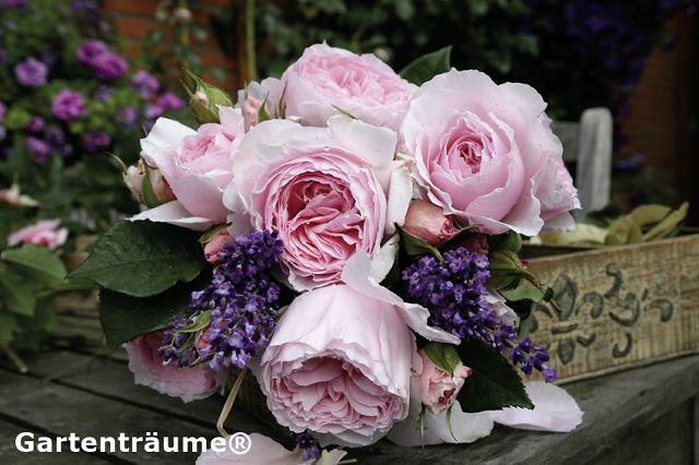 Fragrant bedding roses