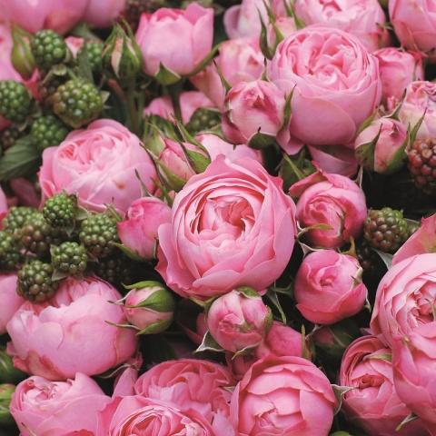 Romantisches Rokoko® Rosen Paket