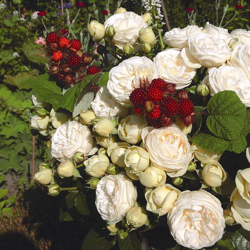 Roses online shopping