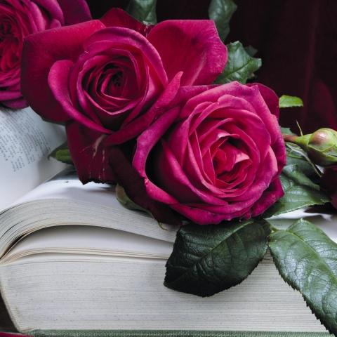 J. W. von Goethe Rose